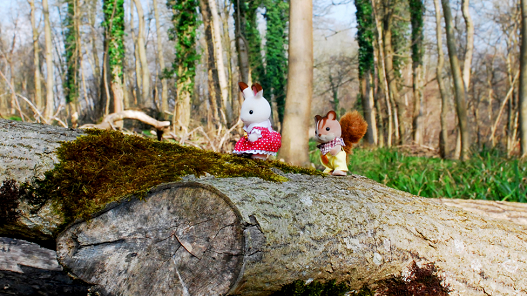 Sylvanian survey reveals low nature knowledge