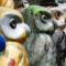 Minerva's Owls of Bath Sculptures Unveiled
